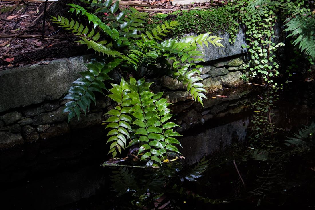 Jardin exotique et botanique roscoff enthusiastic gardener for Jardin exotique