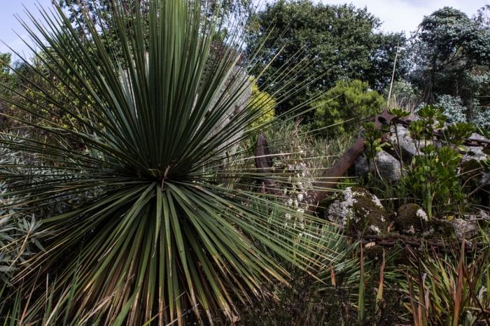 Jardin Exotique et Botanique, Roscoff