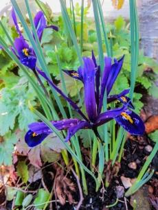 17-3-26 Spring flowers LR-5522