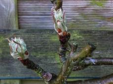 17-3-26 Spring flowers LR-5599