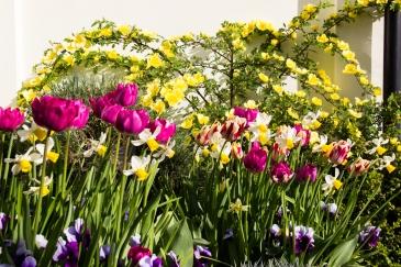 Bulbs in Cratfield