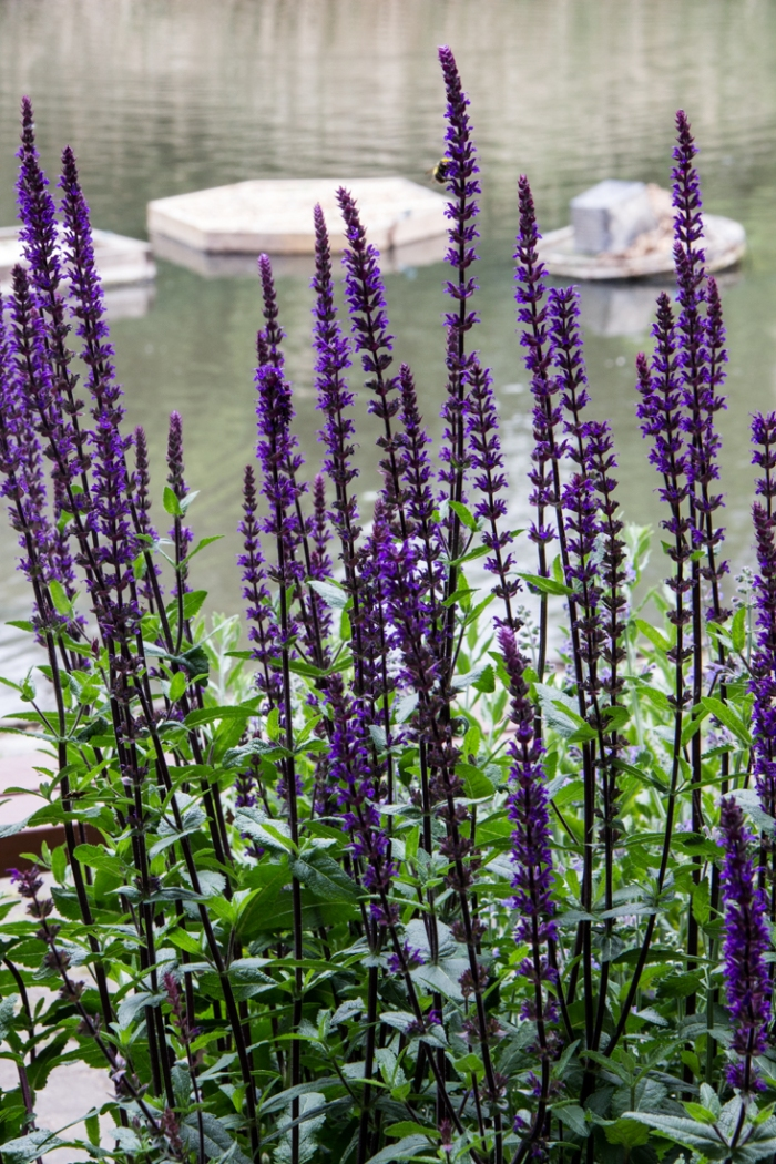 Flowers at Lavender Pond
