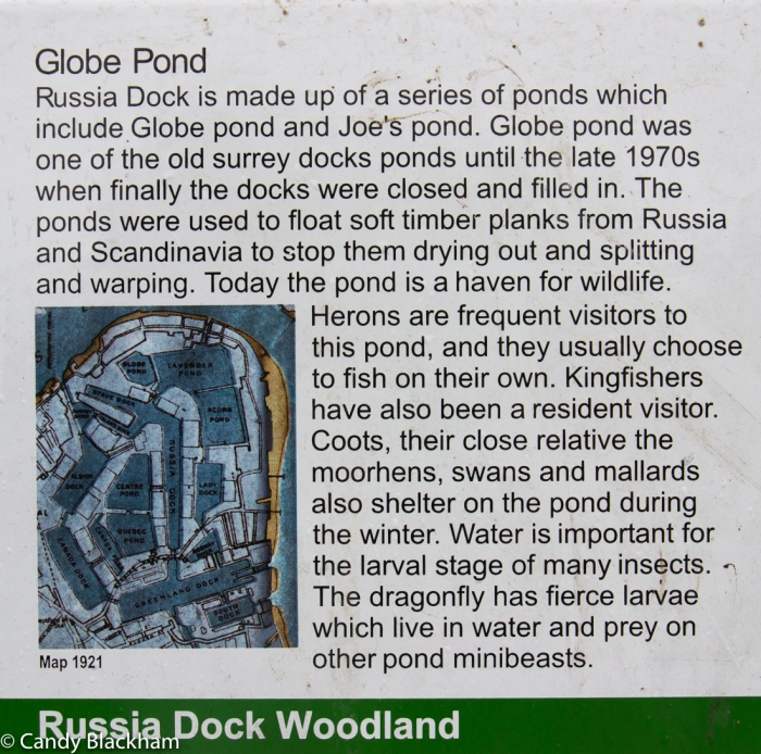 Globe Pond in Russia Docklands