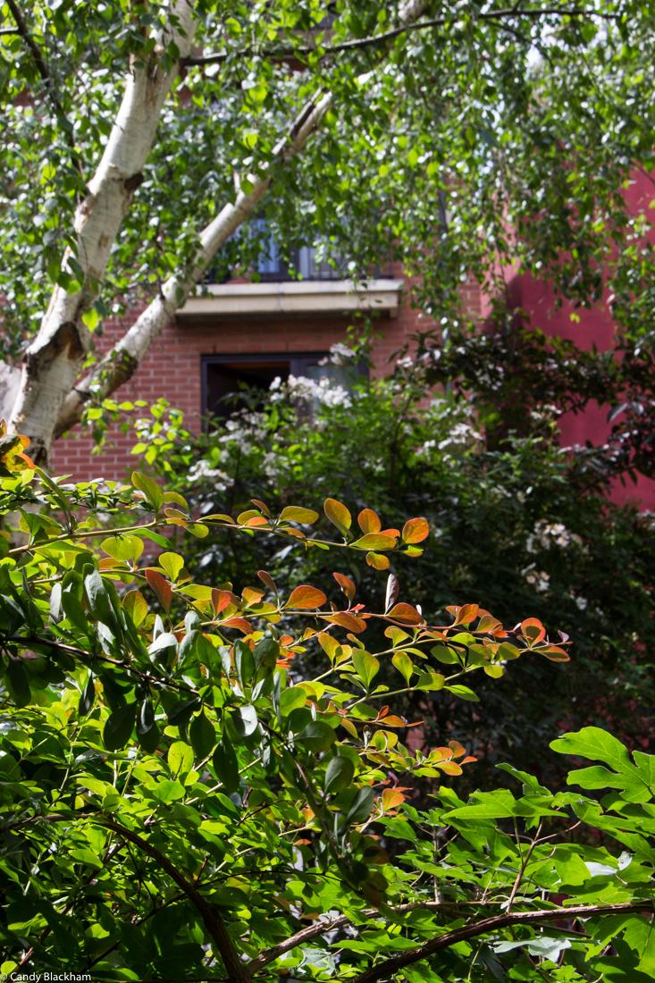 Phoenix Gardens Behind Centre Point Enthusiastic Gardener