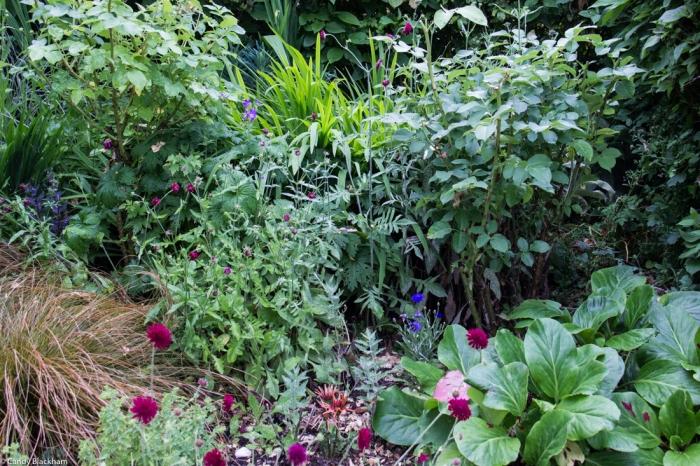 Monk Frith front garden