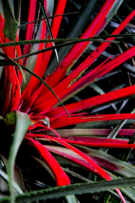 South African plants in the Georges Delaselle Gardens