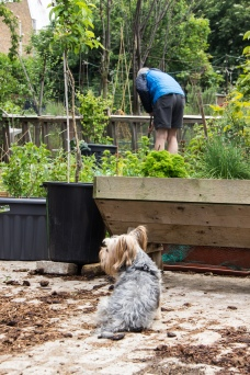 Cable Street Community Garden