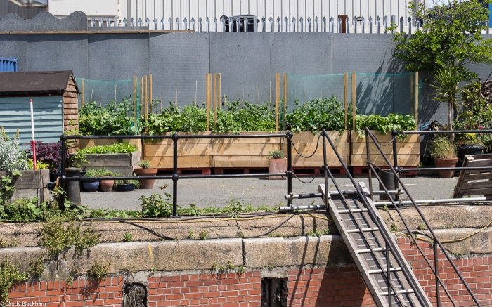 Vegetable planters at Cody Dock