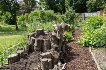 The vegetable growing area at Rainham Hall
