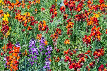 Colourful spring bedding in the lawn