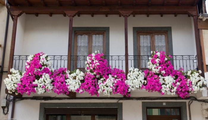 Petunias in Villafranca del Bierzo